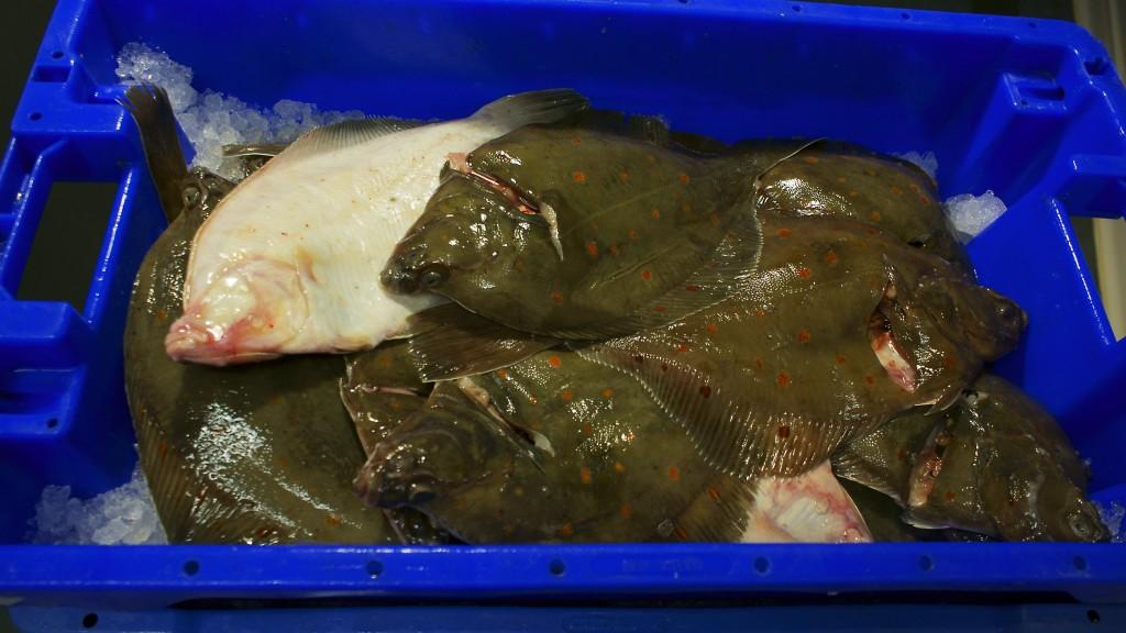Verse vis aanvoer-suezkanaal